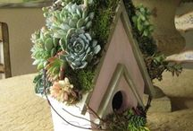 Succulent Surprises / Succulent Plants Used In A Variety Of Ways. / by Nanci McGreevy