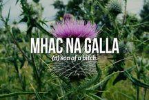 Scottish Aye