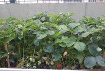 Balkon Bahçem