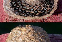 Fossilizado