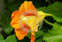 Alexandra Loxton Photography - Flowers, plants, trees, / Images of flowers, plants, trees, mushrooms, fruits, vegetables