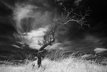 Infrared Research / by Sylvia Shek