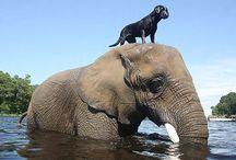 Animal Friendships