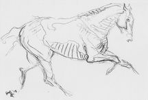 Horse Drawing / It's about drawing, sketch, study…