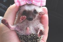 ○○Hedgehogs○○