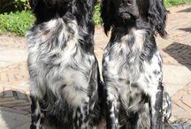 adile's board / crochet and german spaniel dogs