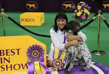 COSEQUIN® Partners with 2016 Westminster Best in Show / COSEQUIN® is also proud to announce that the 2016 Best in Show winner, German Shorthaired Pointer Gch Vjk-Myst Garbonita's California Journey (or CJ), keeps his joints healthy with COSEQUIN®!   Learn more → http://www.cosequin.com/westminster-dog-show/