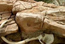 Rockwork Design and Construction