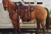 Le Blazer / Développé dans l'Idaho dans le Ranch F. Neil Hinck et Norma Neil en 1959, les chevaux Blazer ont été conçus pour être à l'image des chevaux utilisables ranch de style qui ont aidé à coloniser l'Ouest américain.