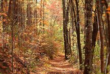 Enjoying the season / A beautiful trail in the North Georgia mountains - fall is a perfect time of year to get outdoors, so head out today to enjoy the crisp invigorating weather and beautiful scenery!