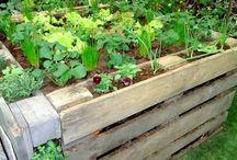 Erhöhte Gartenbeete