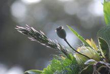 October Flowers / seasonal flowers in the Adelaide Hills