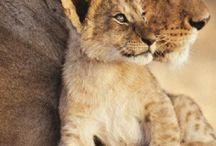 New Brighton Lions