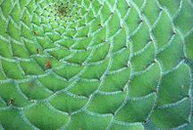 Biomimetic