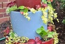 My garden project ideas