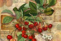 frutas y verdurad