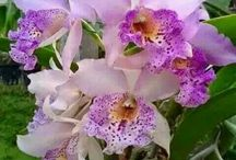 orquídeas deslumbrantes