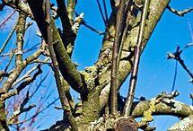 fák gondozása