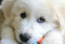 Dogs: Puppy Stuff
