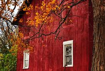 Barns / One of my childhood memories is going to a farm when I was young. The barns were fun because I knew there would be animals.I remember the farmer letting me feed a calf by bottle. / by Diane Thornton