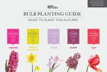 Bulbs to Plant in Autumn / From Daffodils and Tulips to Alliums and Crocus, autumn is the time to plant to guarantee glorious colour in your garden by spring.