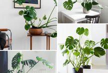 Plantas interior
