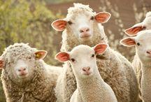 WEIDEGLÜCK! / Tiere, wie wir sie lieben: glücklich und frei!