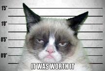 GRUMPY CAT / I ❤️ Grumpy cat / by Michael Nishikawa