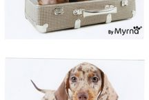 Teckels en Honden