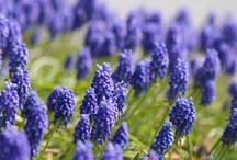 Blue bayou (my future all-blue garden) / by Liz Cameron