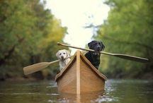 i heart animals! / by Gina Avis