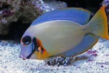 Fish I want