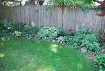 szegélynövény -edging plan / árnyéktűrő növények, shadow-tolerant plants
