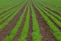Organic Farming News