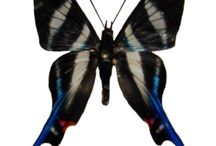 Butterflies & Moths / by Kathy Morton Stanion