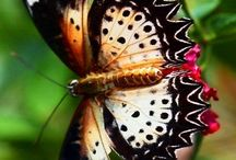 Butterfly, bugs and dagonflyes