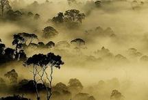 Borneo / Min næste rejse...