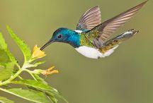 Photographing hummingbird tips