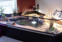 turtle tank ideas