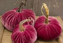 Velvet Pumpkins (kadife kabaklar)