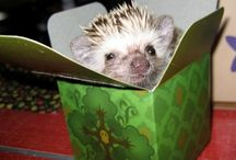 All God's Critters - Hedgehogs and Ferrets / by Kay Hough