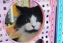 Katzen, Cats / Liebe zu Katzen und Haustiere