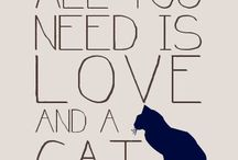 Cats and loves