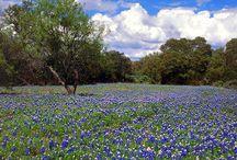 Texas, My Texas