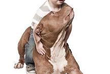 pitbull my friend