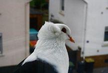 Tierische Bilder / Um Tieraufnahmen, wie man am Titel schon ahnen kann ♥