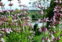 Le jardin des Douces Angevines / L'atelier-Laboratoire des Douces Angevines et son jardin qui descend jusqu'au Loir. (Photos DA)