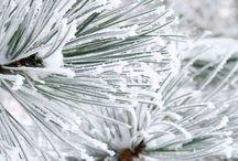 WINTER / winter / inverno e i suoi colori