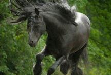 Horses ❤️