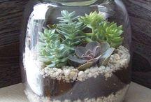Florarium - plant terrarium - glass garden